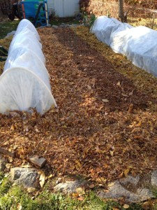 Shredded leaves keep soil in place, add nutrients to the soil and make a great, soft path material to keep weeds down. You can even alternate leaf-variety for patterns.