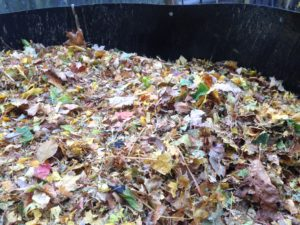 Leaves, glorious leaves. Free mulch, nutrients and carbon-rich compost material, conveniently bagged and easily accessible in your neighborhood!